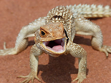 2Le_royaume_des_reptiles